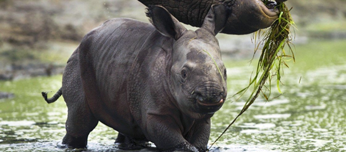 Os 5 maiores filhotes do reino animal