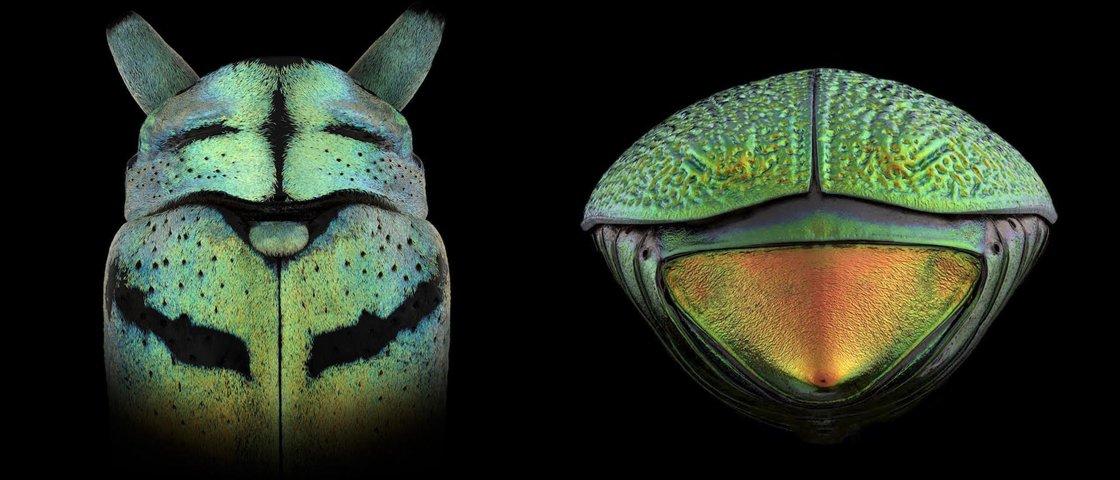 O que você vê nestes insetos?