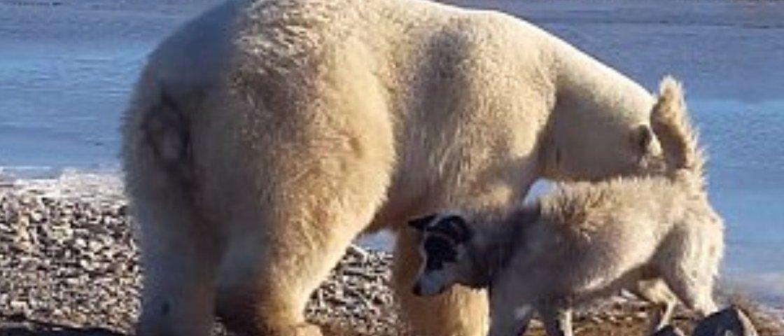 Este urso agradando um cachorro é tudo o que você precisa ver hoje