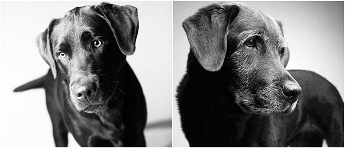 Antes e depois: veja como o tempo passou para estes 10 cães