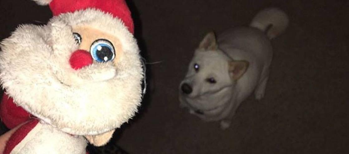 A cachorrinha com o maior espírito natalino que você já viu