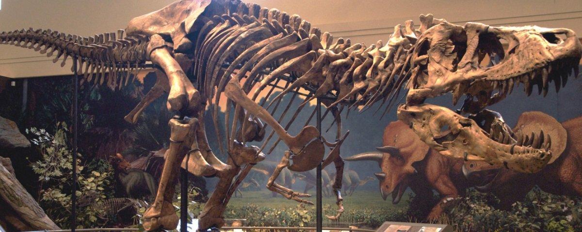 Você tem noção do poder que tinha a mordida de um Tiranossauro Rex?