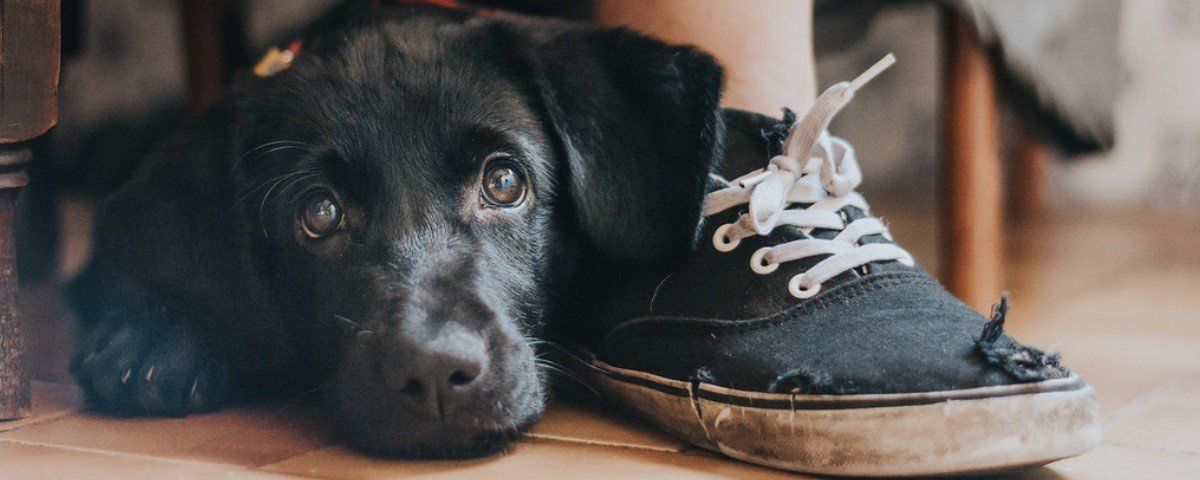 Sabia que existe um concurso anual de fotos de cães? Confira as melhores