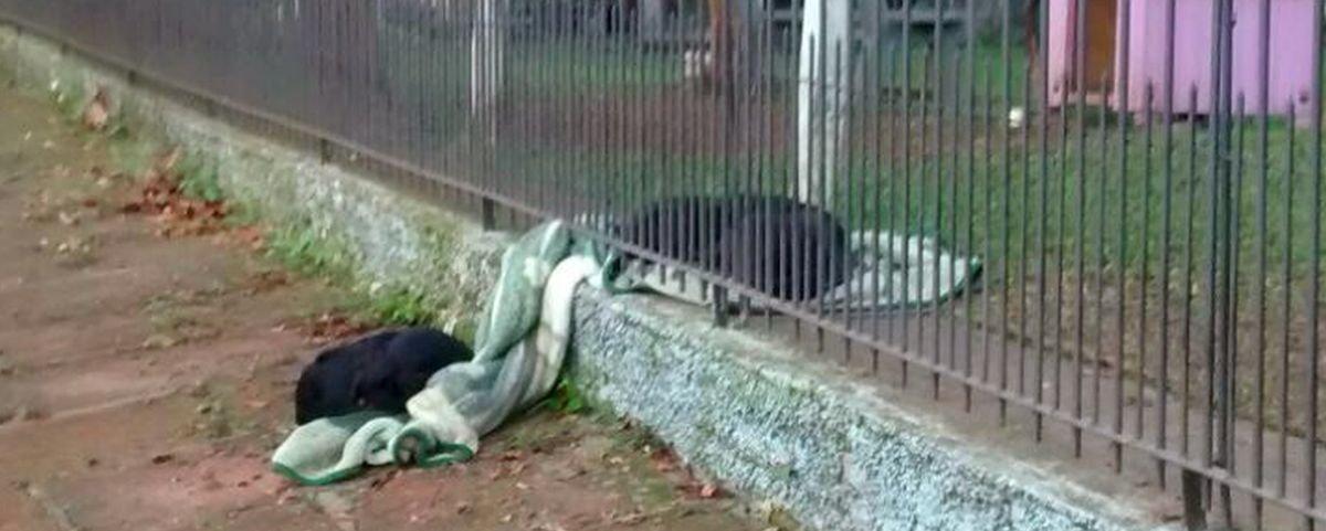 Cachorrinha dá um exemplo de generosidade no Rio Grande do Sul