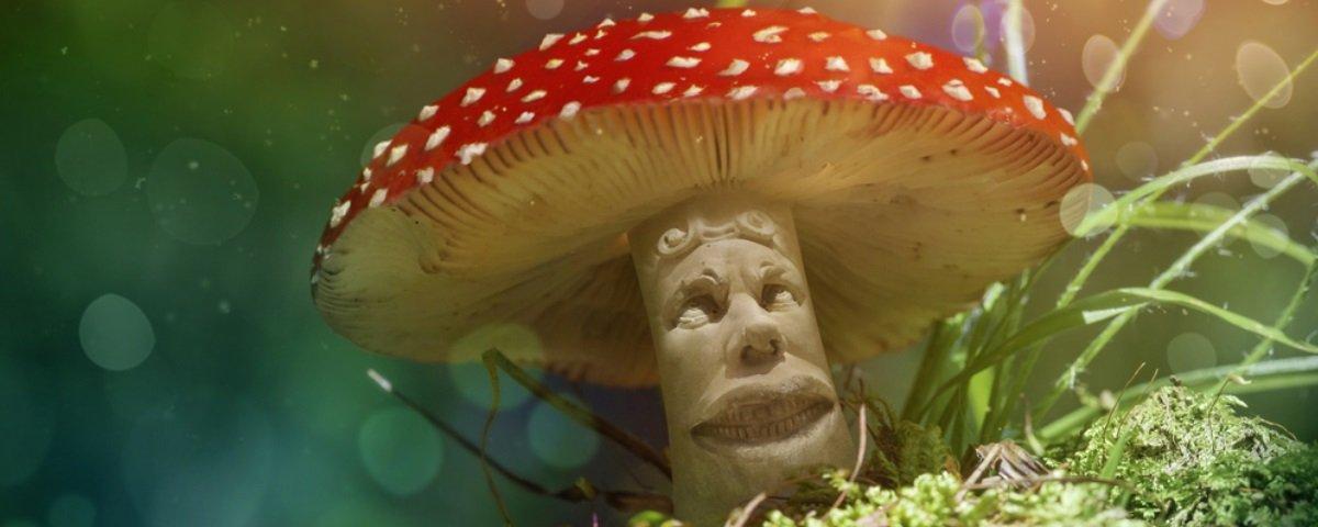 Líderes religiosos tomam chá de cogumelo para experimento científico