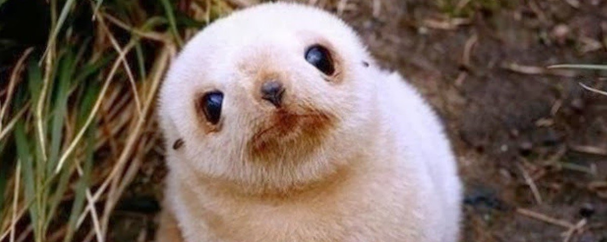 12 filhotes de animais que vão deixar seu dia mais fofo