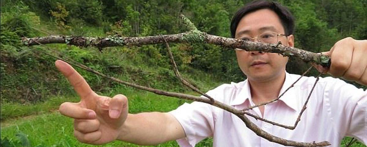 Tamanho é documento: cientistas criam o maior bicho-pau do mundo