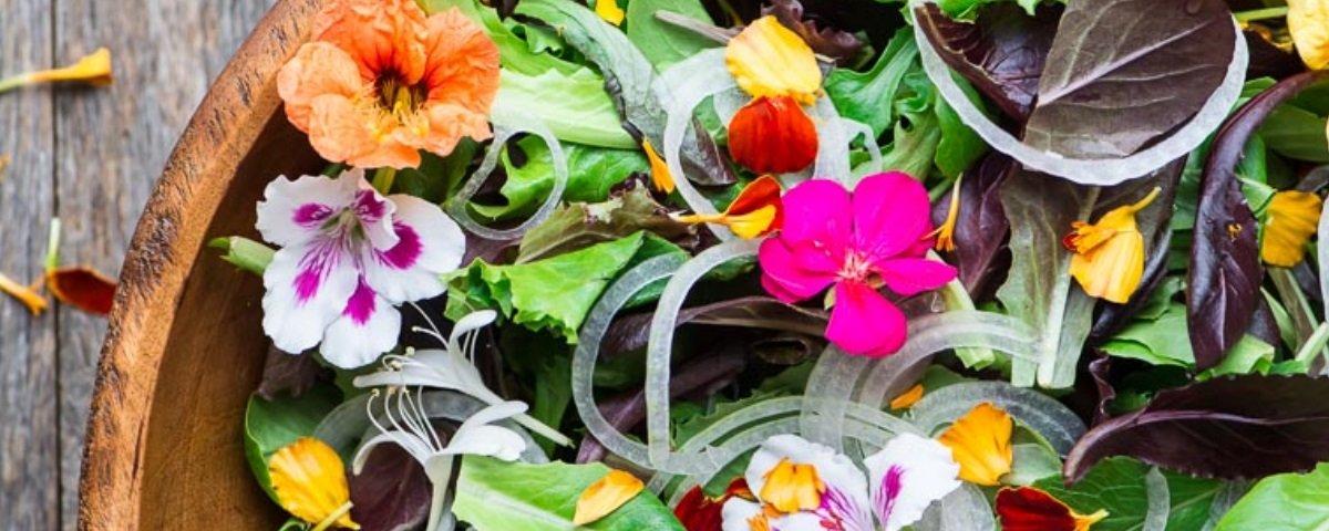 Embelezando a sua dieta: conheça 5 flores que são comestíveis