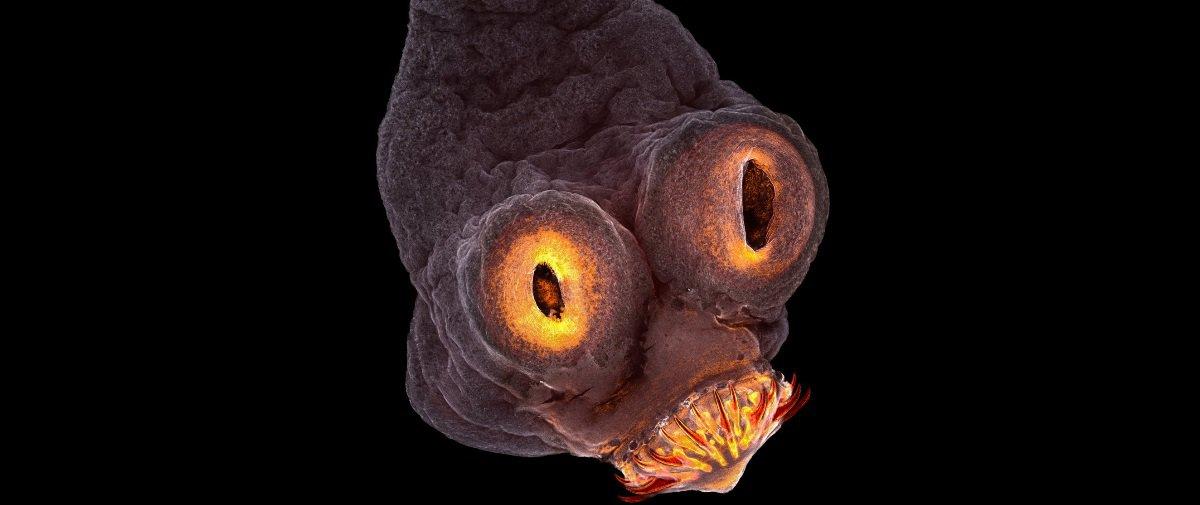 Estas 20 fotos incríveis revelam o que apenas os microscópios permitem ver