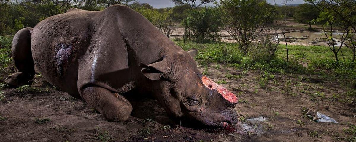 Confira as melhores fotos de vida selvagem de 2017