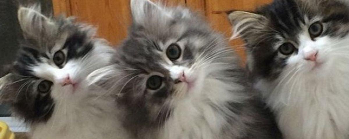 Idosa foi presa por treinar seus 65 gatos para roubarem joias dos vizinhos?