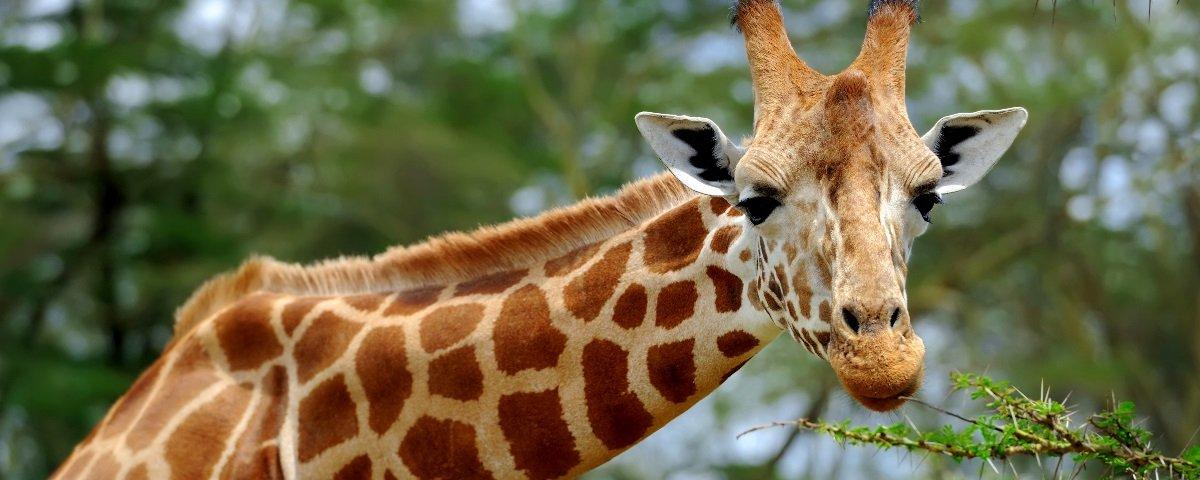 25 coisas fantásticas que você provavelmente não sabe sobre os animais