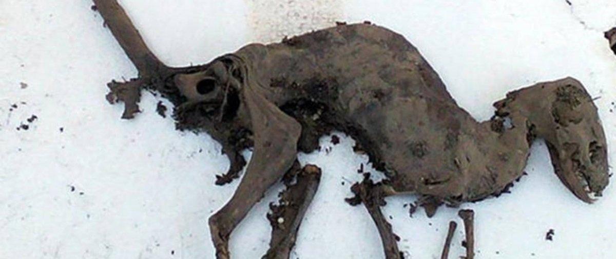 Descobriram uma carcaça que parece um dinossauro superpreservado na Índia
