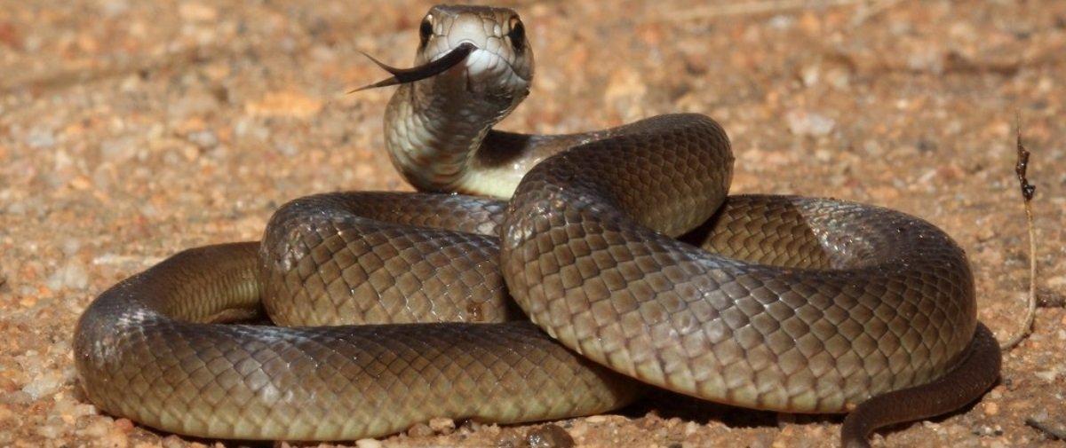 Enquanto isso na Austrália... Criança acha 7 ninhos de cobra em parquinho