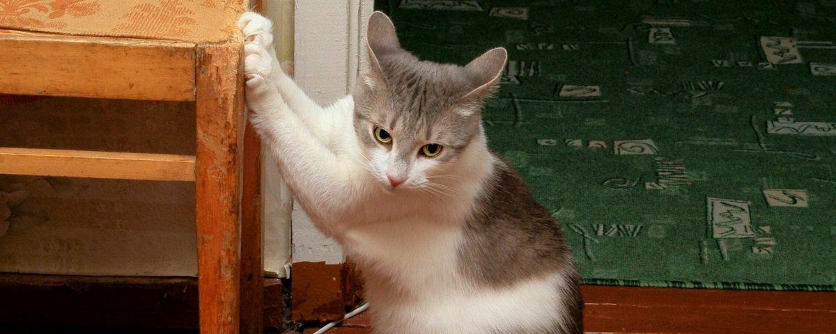 Por que os gatos amam arranhar móveis?