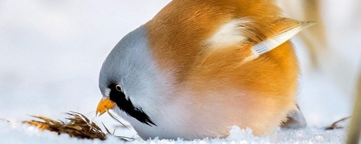Você precisa ver as fotos destes Angry Birds da vida real