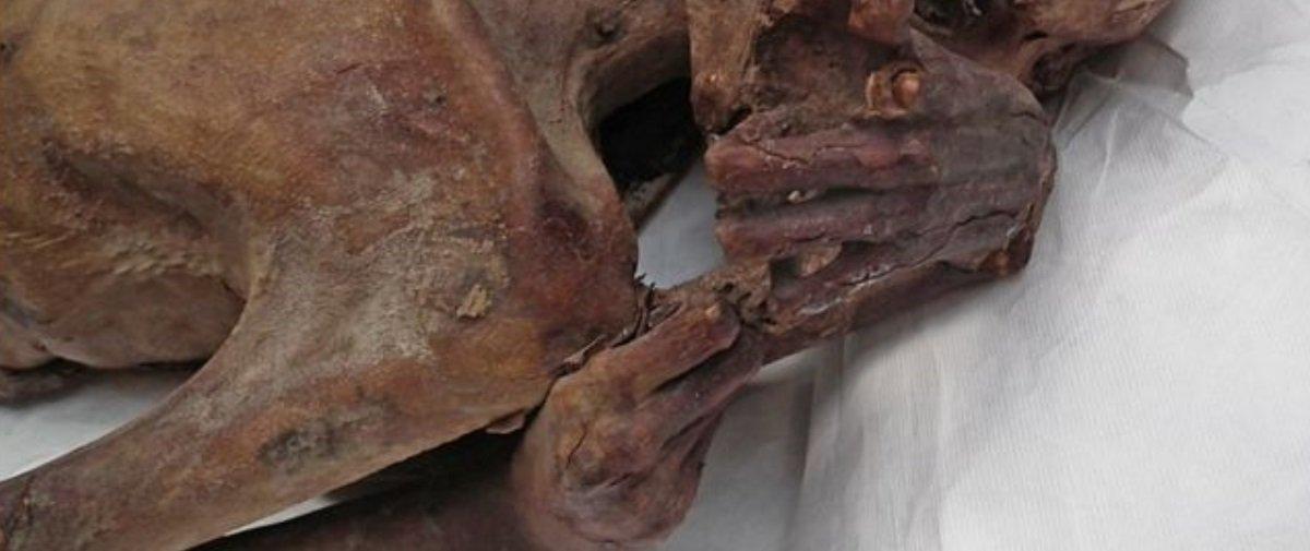 Tattoo feminina mais antiga do mundo é identificada em múmia de 5 mil anos