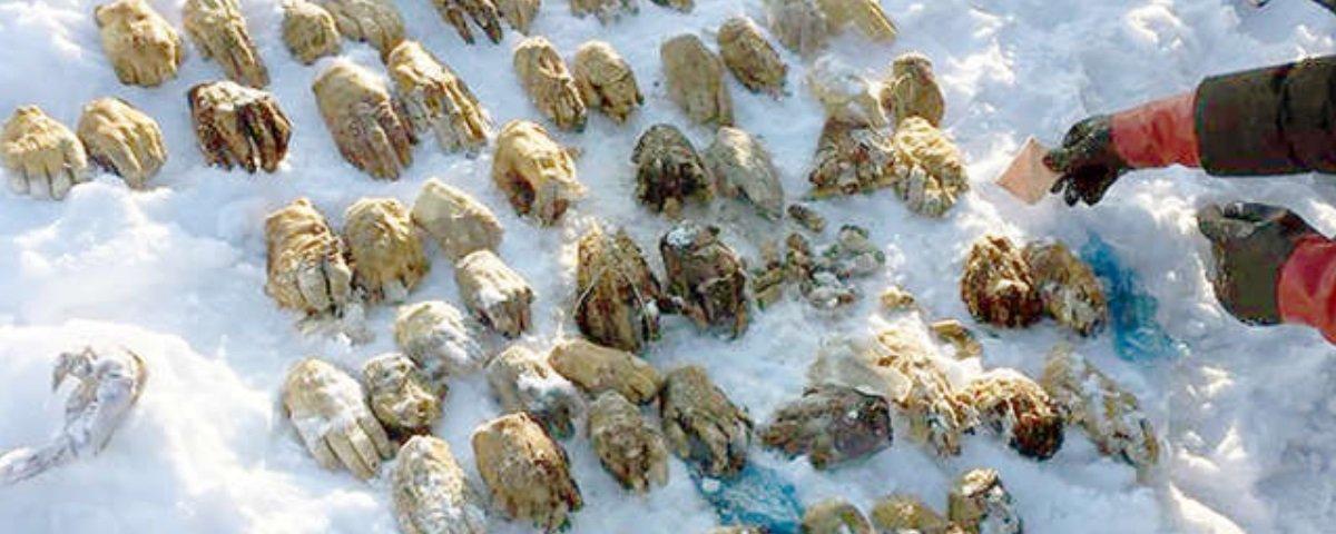 Finalmente descobriram a origem das mãos congeladas achadas na Rússia