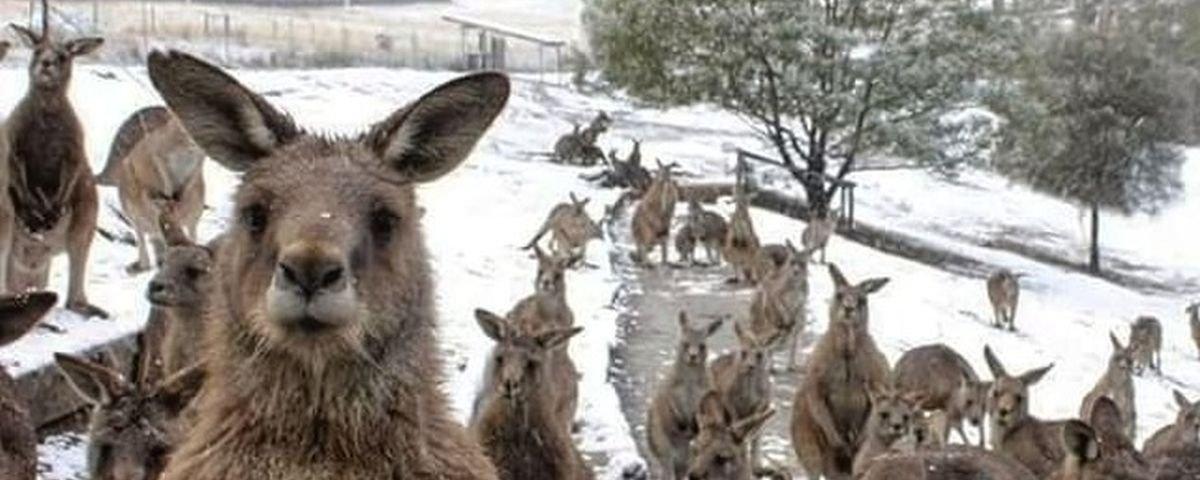12 curiosidades sobre a Austrália que fogem do óbvio