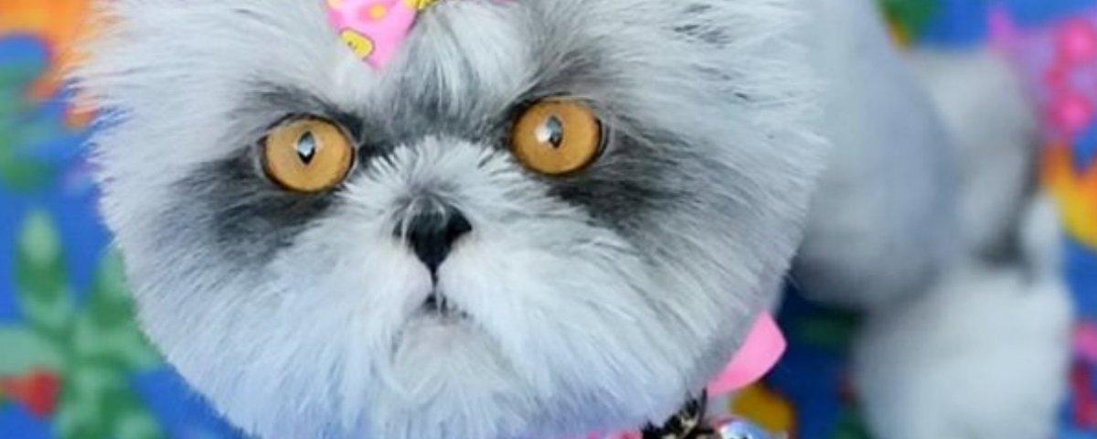 Equívoco animal: 5 bichos que já foram confundidos com cachorros