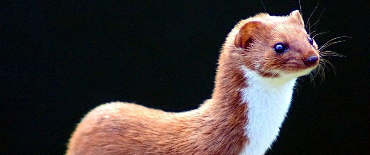7 animais superfofos que você talvez desconheça