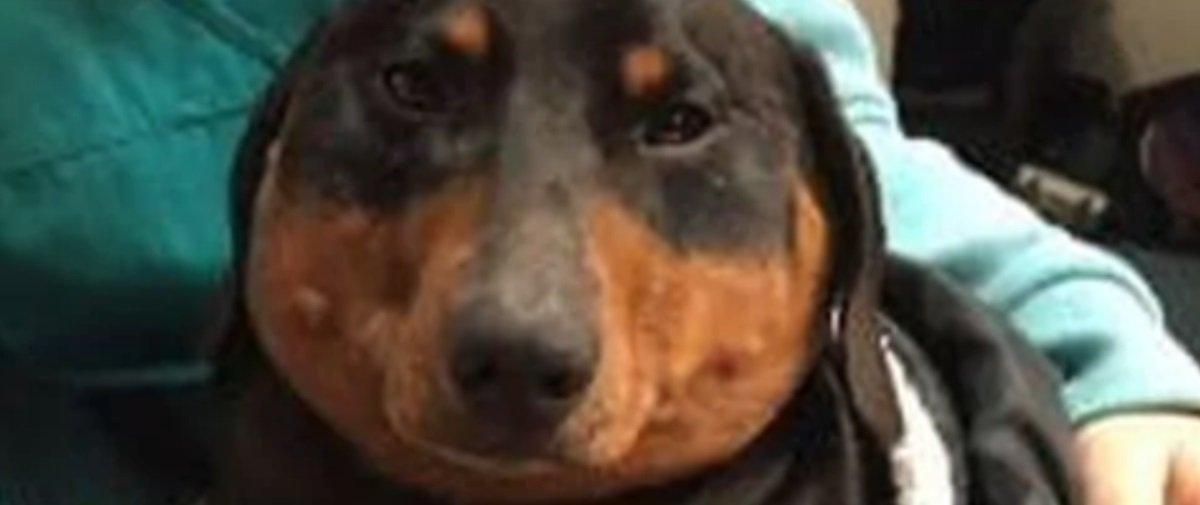 Travessura animal: olha o que aconteceu com o coitado deste cachorro!
