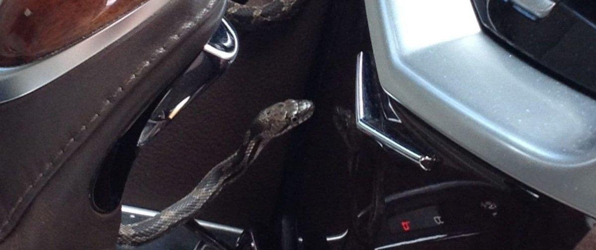 Você dirigiria um carro sabendo que existe uma cobra escondida dentro dele?