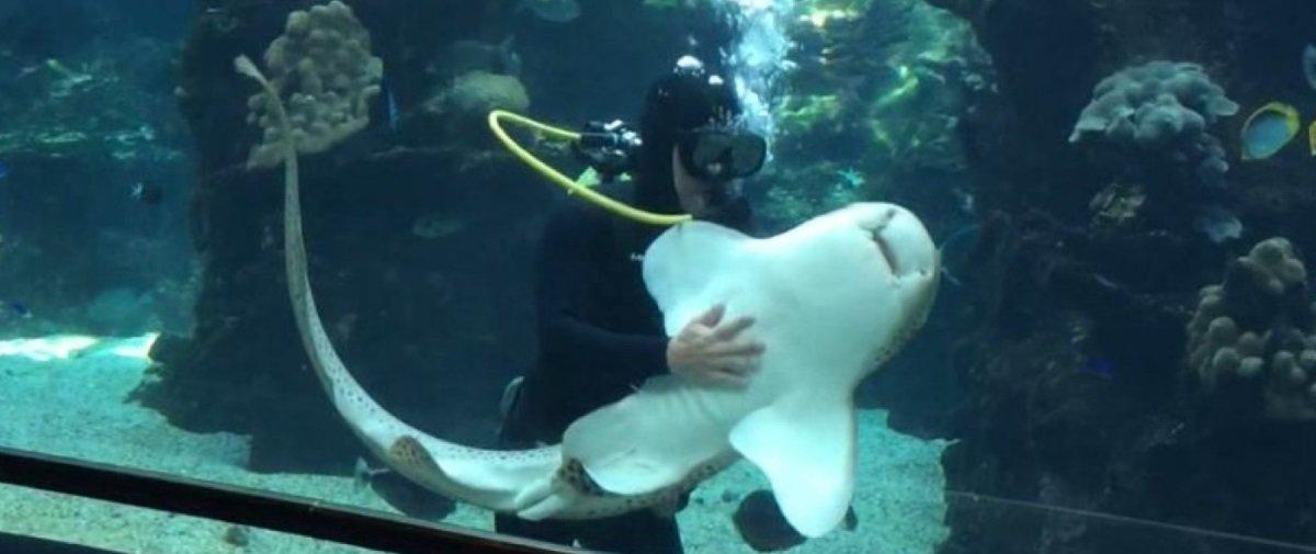 Você já viu um tubarão se comportando como se fosse um cachorro?