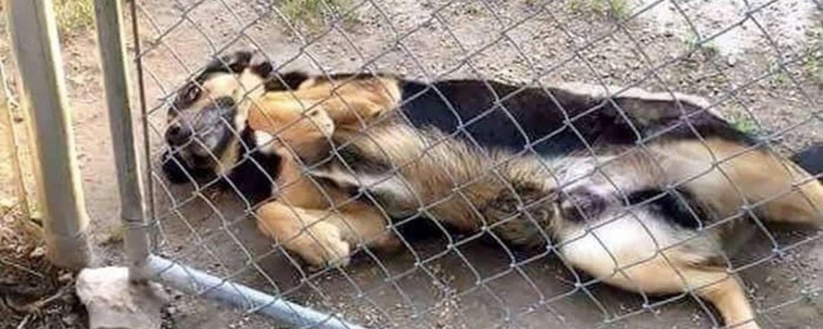 Cuidado com o cão: 11 'bestas ferozes' que vão fazer você se derreter