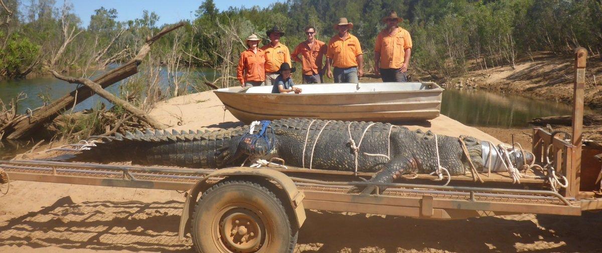 """""""Crocossauro"""" monstro de quase 5 metros é capturado — adivinhe onde!"""