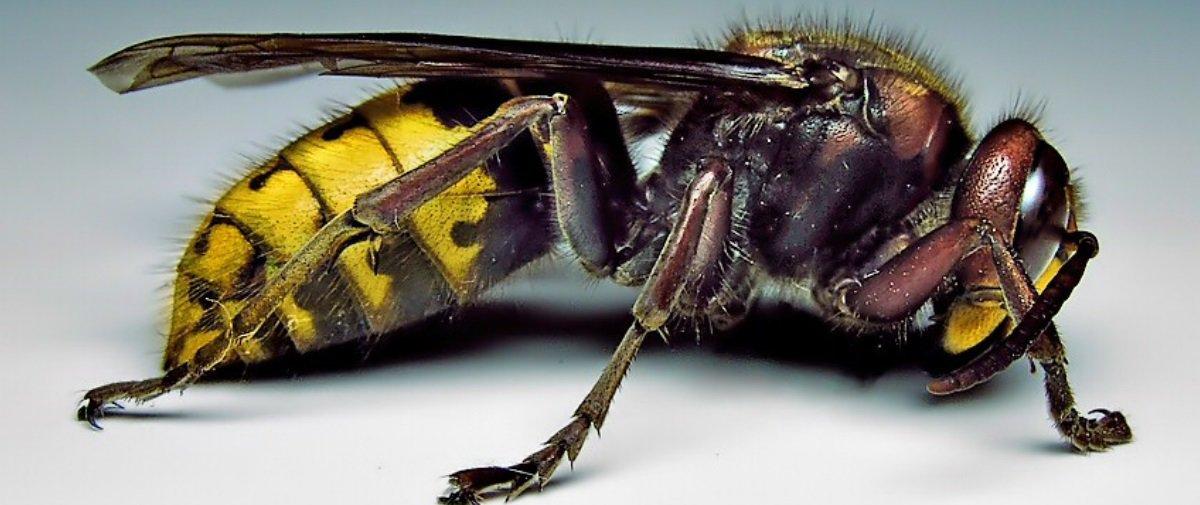Mais 3 efeitos colaterais bizarros que podem ocorrer após picadas de bichos