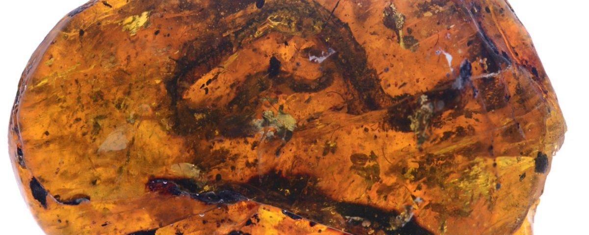 Descobriram um bebê cobra preservado em âmbar há 99 milhões de anos