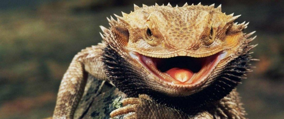 10 curiosidades interessantes e aleatórias relacionadas com lagartos