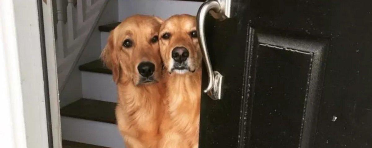 15 fotos hilárias de cachorro que foram feitas no timing perfeito