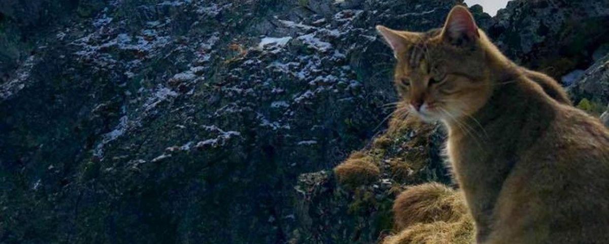 Alpinista encontra gato faceirão no topo da mais alta montanha da Polônia