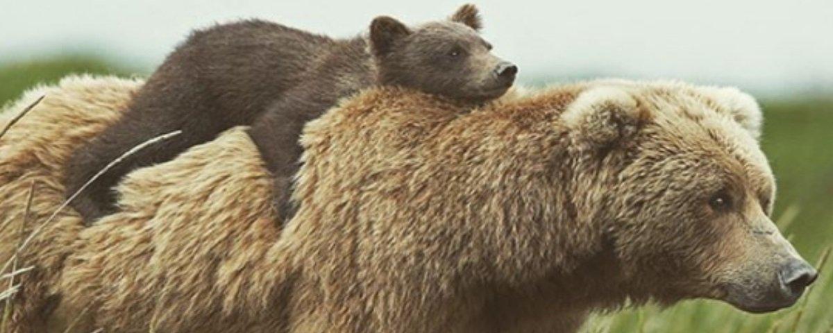 11 fotos de animais que nos mostram a beleza do amor de mãe