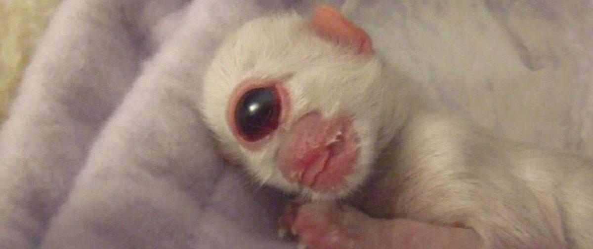 Pequenas aberrações: confira 6 animais com deformidades bastante raras