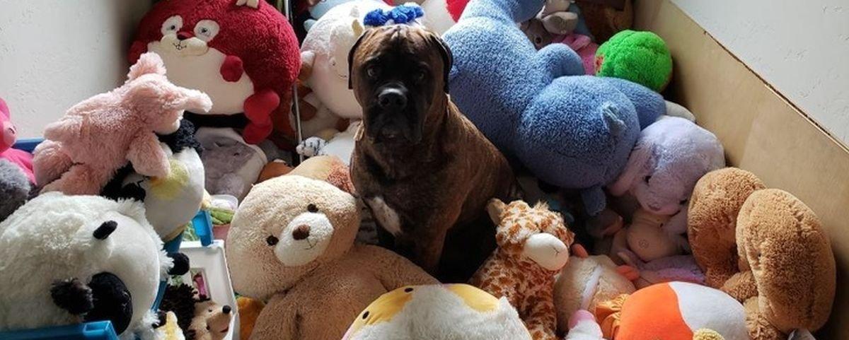 Tem Na Web - 13 relações entre cães e seus brinquedos favoritos que são puro amor