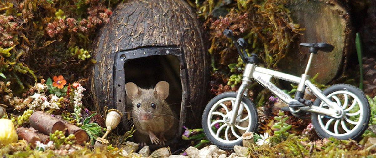 Tem Na Web - Cara descobre família de ratinhos no quintal e cria um vilarejo superfofo