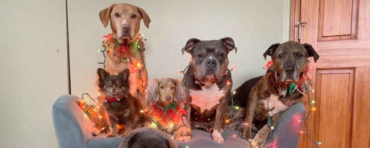 17 fotos de animais que adoram a época natalina