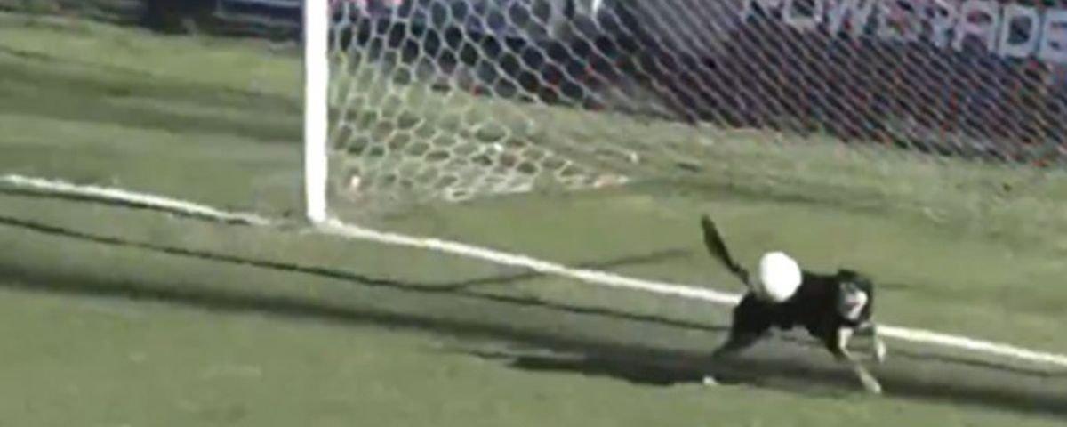 Após falha de goleiro, cachorro salva time em cima da linha do gol