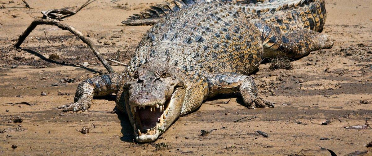 Você consegue adivinhar quais são os animais mais letais da Austrália?