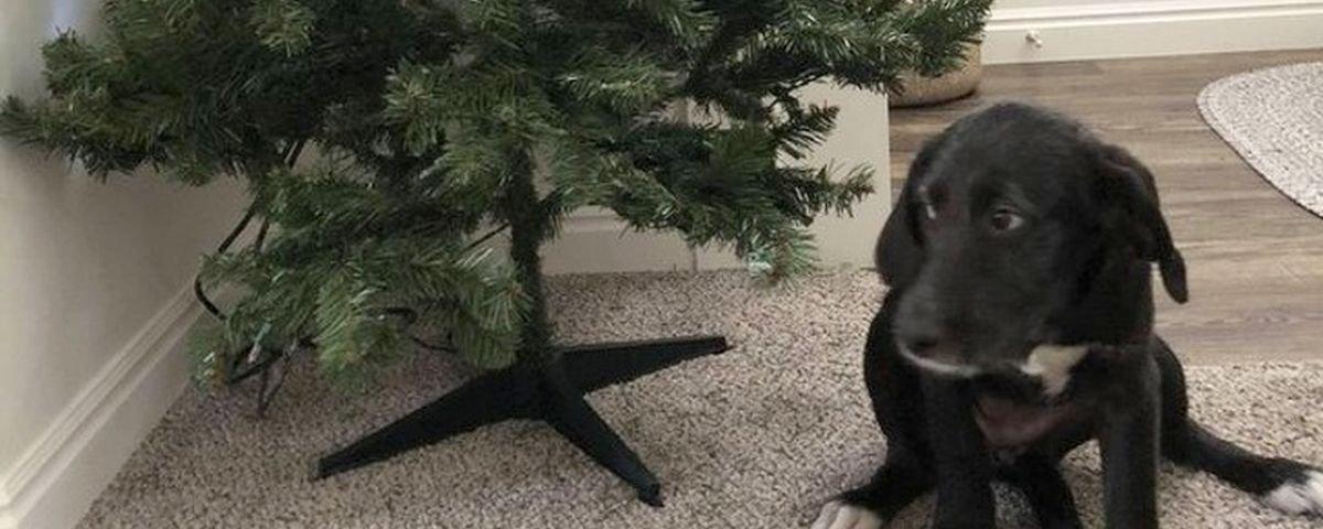 Tem Na Web - 15 provas de que os cachorros são divertidos mesmo quando aprontam