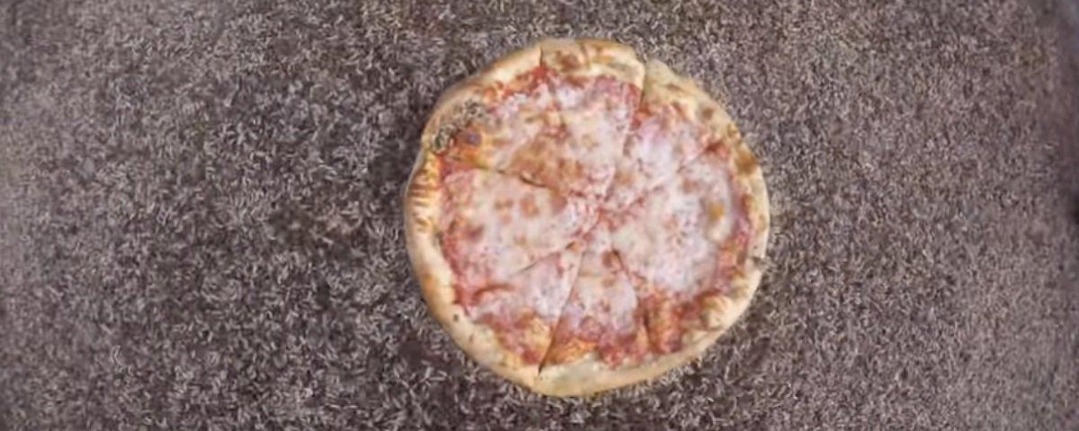 Esta montanha de larvas devorou uma pizza inteira em apenas 2 horas