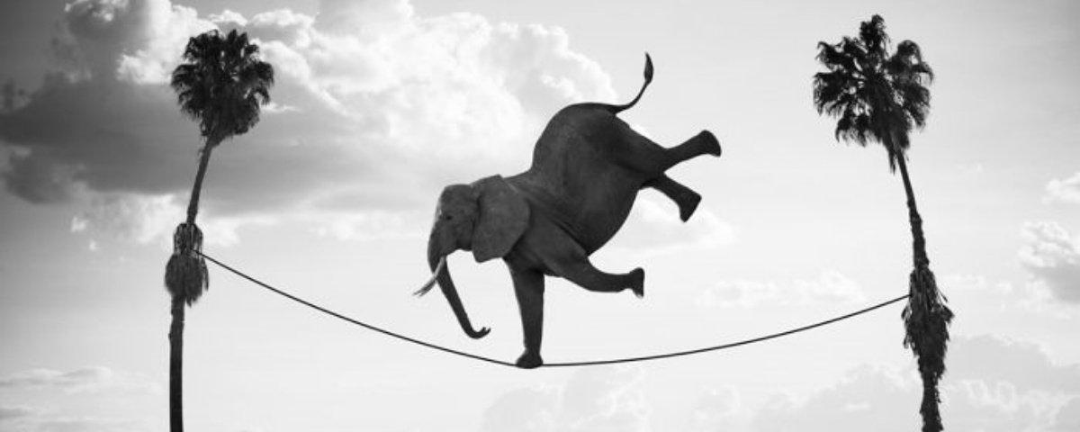 18 montagens que mostram como seria 'a vida secreta dos animais'