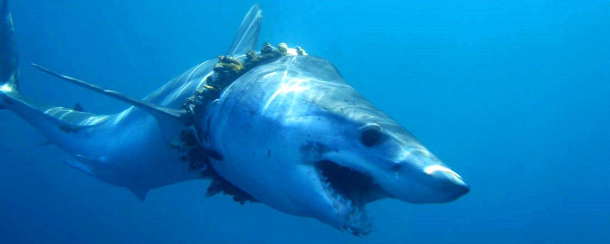 Vida marinha em risco: Pesquisa destaca o impacto do plástico  nos oceanos