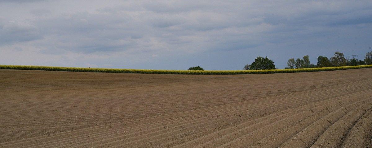 Agropecuária é responsável por 13% das emissões globais de CO2, diz estudo