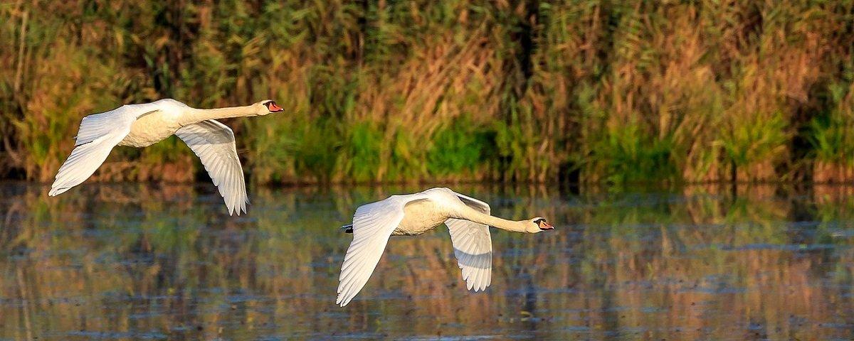 Resultado de imagem para aves voando aos pares