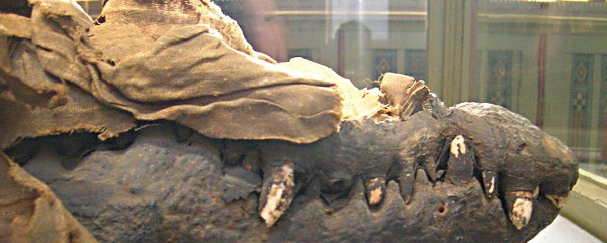 Antigos egípcios matavam crocodilos a pauladas para mumificá-los