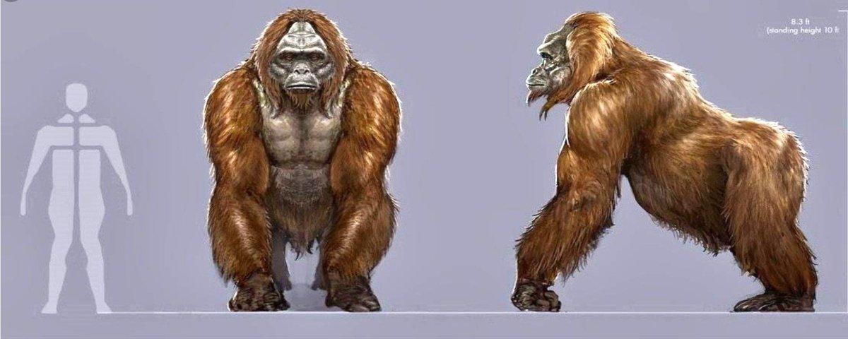 Conheça as versões reais de criaturas lendárias e fictícias